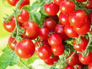 Groente-tomaat-snack-evita
